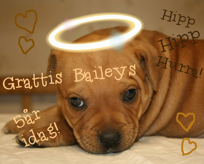 Baileys5år